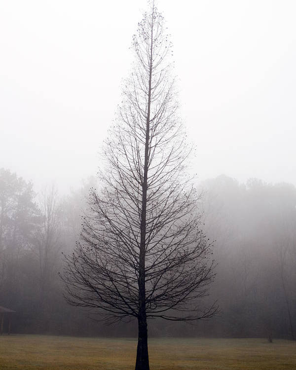 Scenic Poster featuring the photograph Tree In Fog by Ayesha Lakes