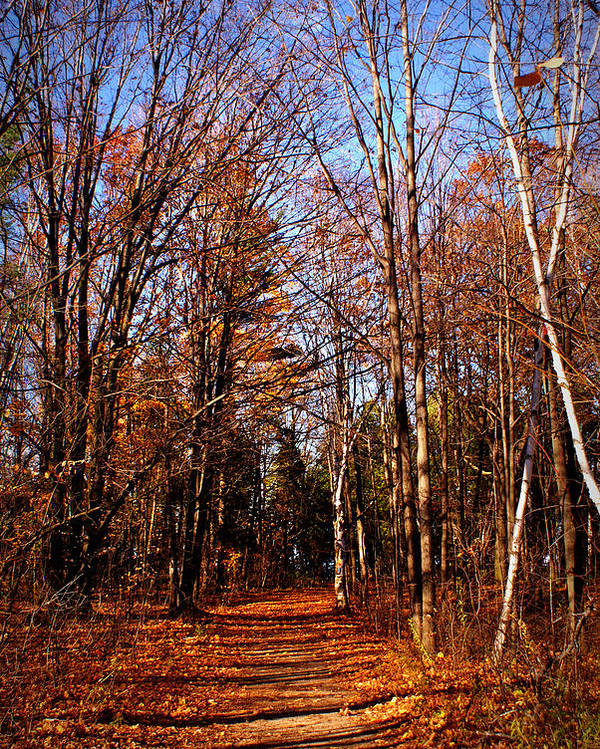 Trees Poster featuring the photograph Tree Lined Path by Amanda Stross