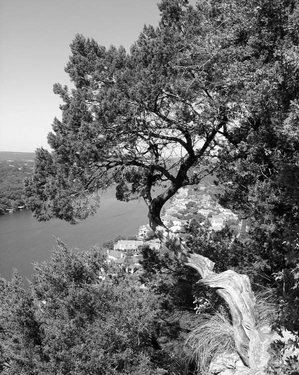 Mount Bonnell Poster featuring the photograph Tree On Mount Bonnell by Lindsey Orlando