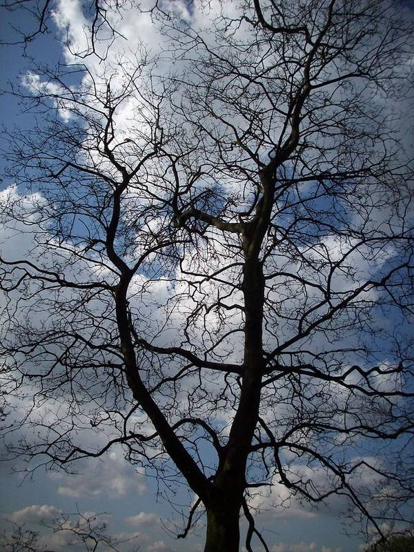 Trees Poster featuring the photograph Trees 1 by Helene Champaloux-Saraswati
