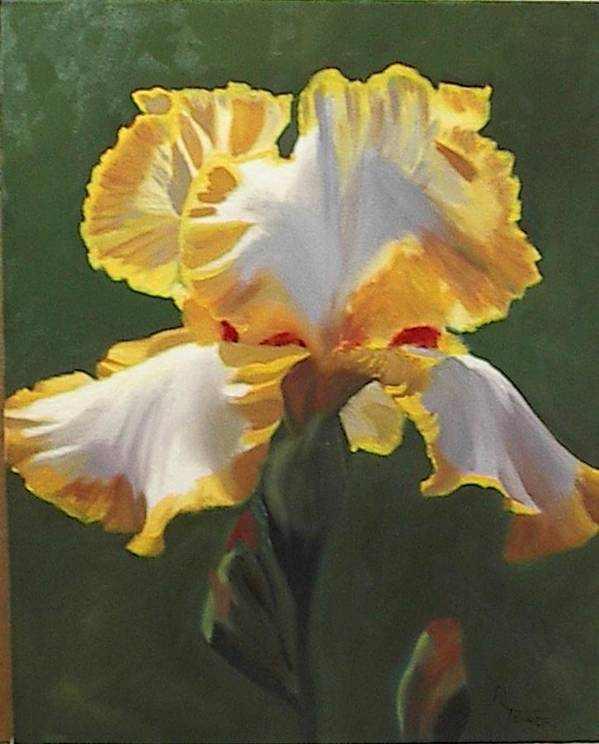 Floral Poster featuring the painting Trimmed In Yellow 1 by Robert Tower