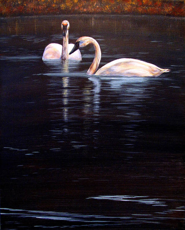 Trumpeter Swan Poster featuring the painting Trumpeter Swans by Karen Peterson