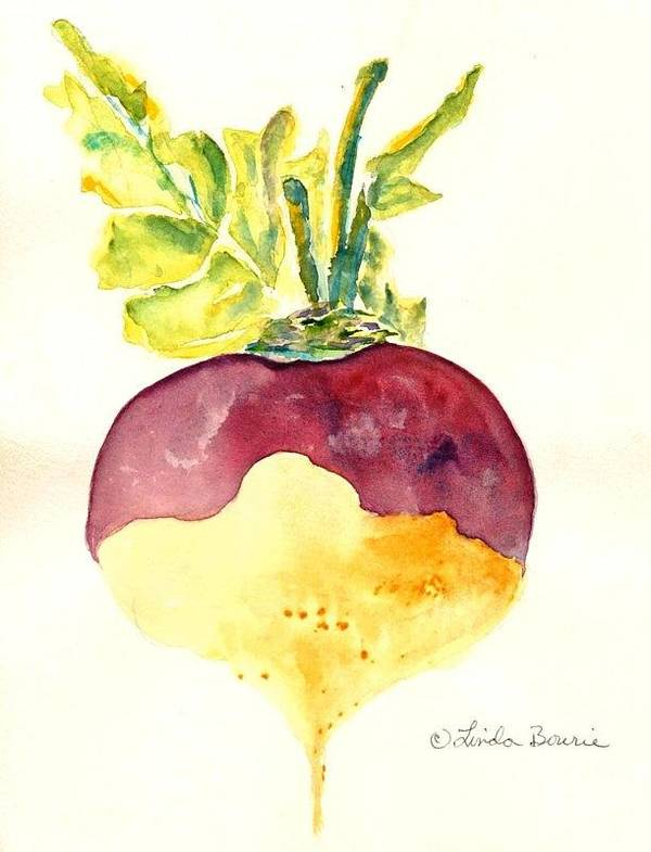 Turnip Poster featuring the painting Turnip by Linda Bourie