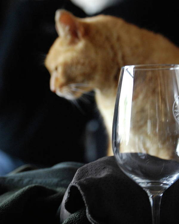 Wine Poster featuring the photograph Two Of My Favorite Things by Lori Leigh