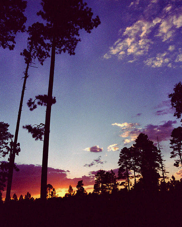 Arizona Sunset Poster featuring the photograph Two Pines Sunset by Randy Oberg