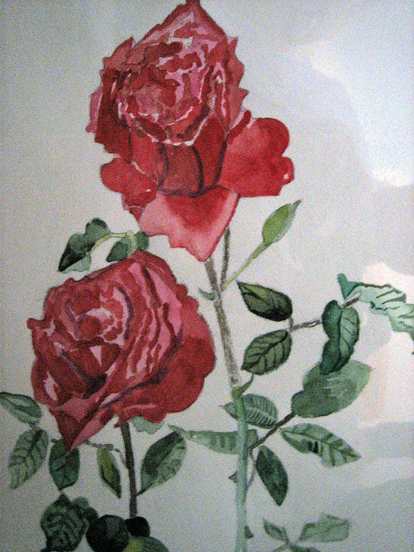 Botannicals Poster featuring the painting Two Roses by Holly Schussler