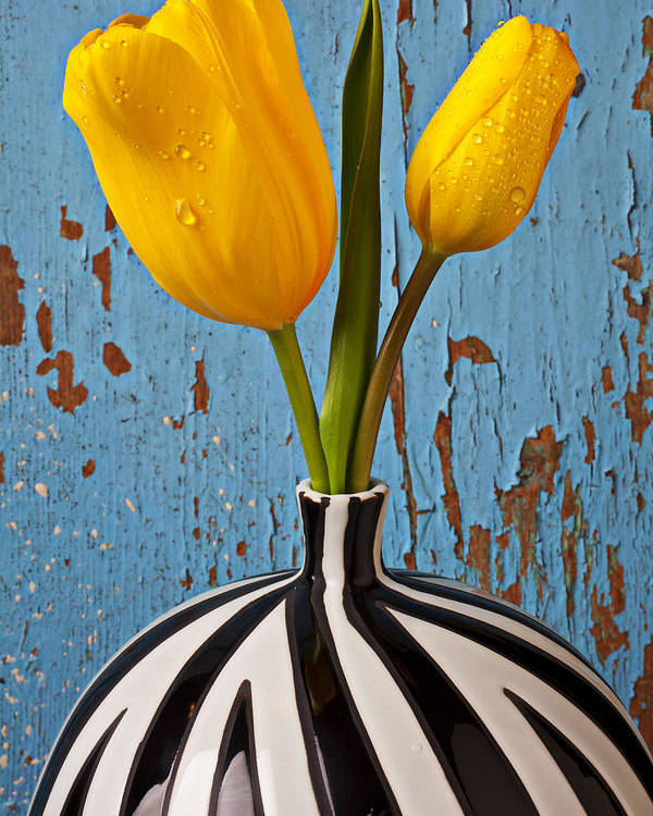 Two Yellow Poster featuring the photograph Two Yellow Tulips by Garry Gay