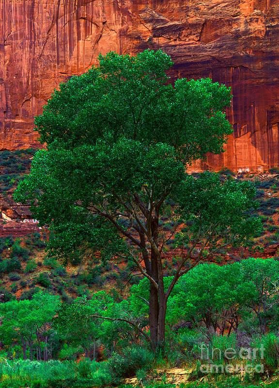 Virgin River Poster featuring the photograph Utah - Cottonwood by Terry Elniski