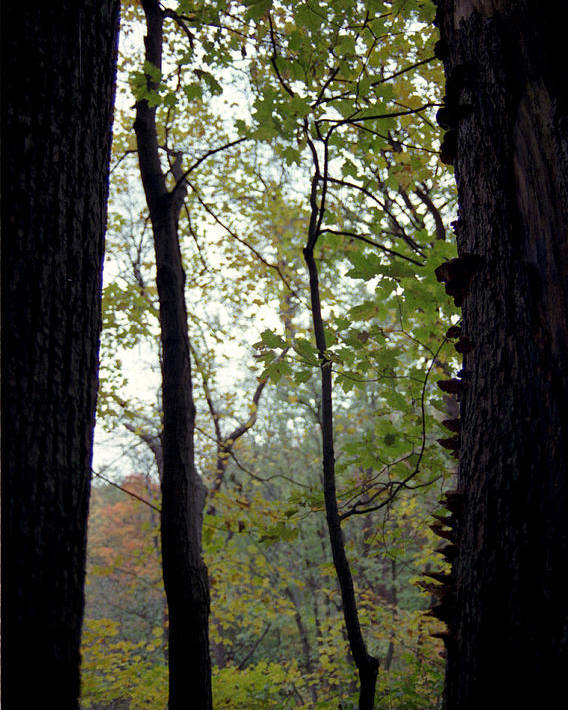 Tree Poster featuring the photograph Vertical Limits by Randy Oberg