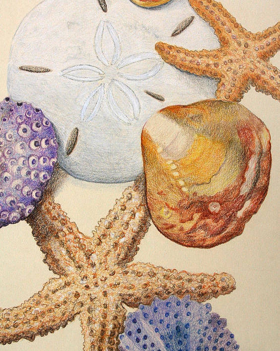 Shells Poster featuring the drawing Vertical Starfish by Glenda Zuckerman