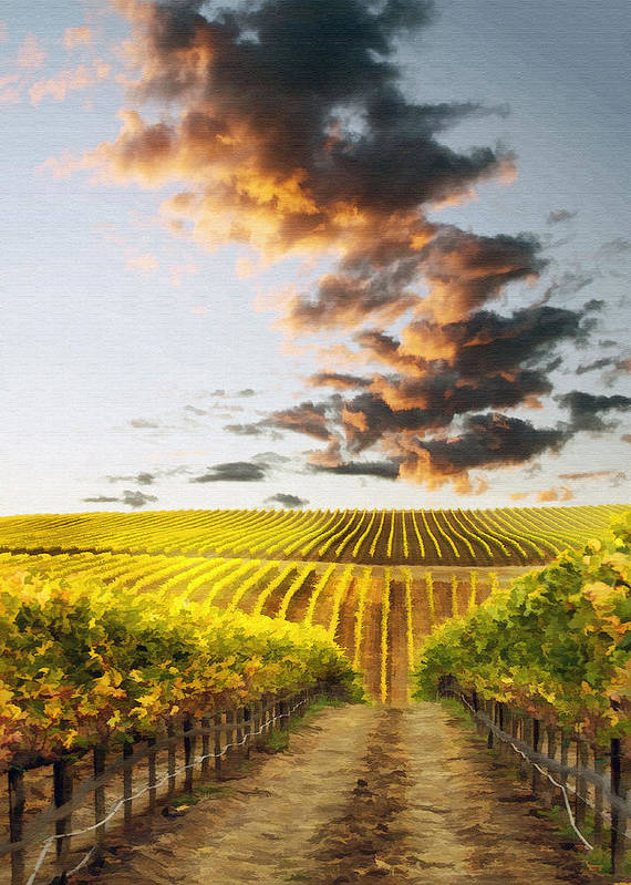 Vineyard Poster featuring the photograph Vineard Aglow by Sharon Foster