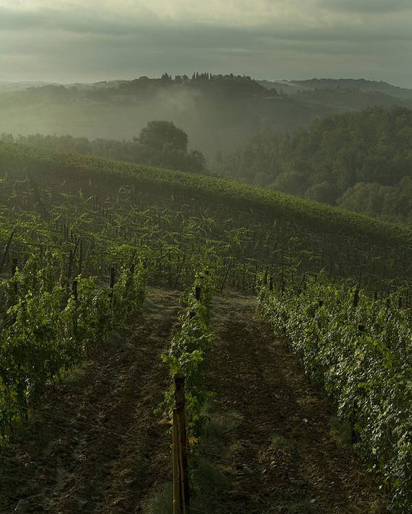 Vineyards Poster featuring the photograph Vineyards Along The Chianti Hillside by Todd Gipstein