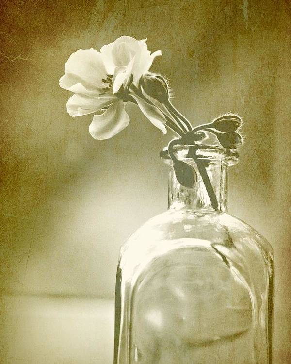 Vintage Poster featuring the photograph Vintage Geranium by Amy Neal