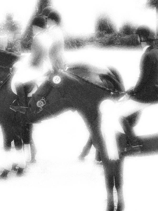 Horse Poster featuring the photograph Waiting The Call by Donna Thomas