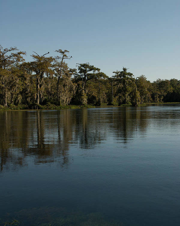 Color Photograph Poster featuring the photograph Wakulla Springs River by Wayne Denmark