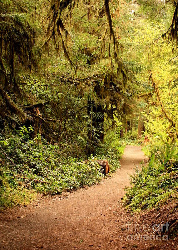 Forest Poster featuring the photograph Walk Into The Forest by Carol Groenen