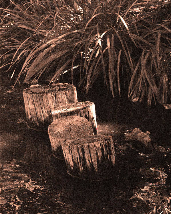 Sepia Poster featuring the photograph Water Garden by Audrey Venute