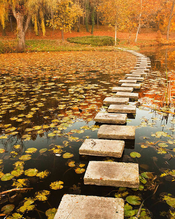 Lake Poster featuring the photograph Way In The Lake by Evgeni Dinev