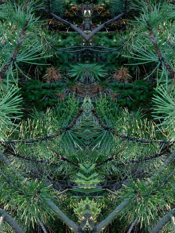Nature Poster featuring the photograph We Live In The Pines by Marilynne Bull
