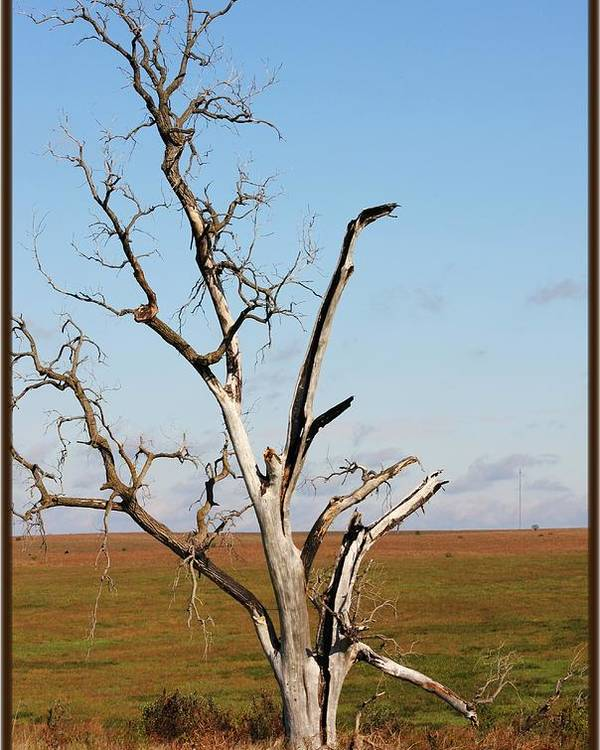 Tree Poster featuring the photograph Weathered by Jim Darnall