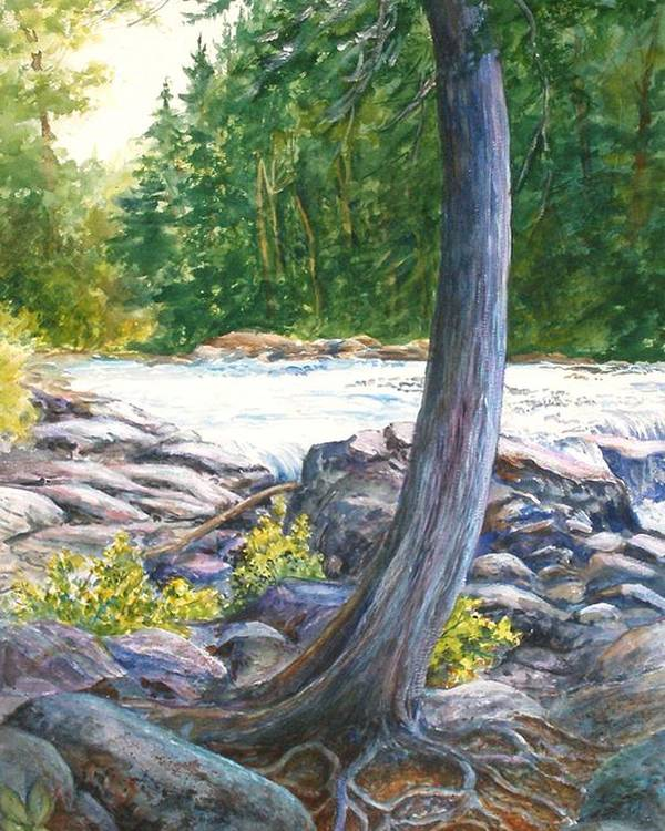 Trees;roots;water;pine Trees;rocks;adirondacks; Poster featuring the painting Weathered Roots Of Time by Lois Mountz
