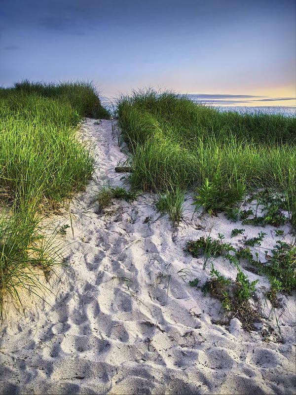 Beach Poster featuring the photograph Wellfleet Beach Path by Tammy Wetzel