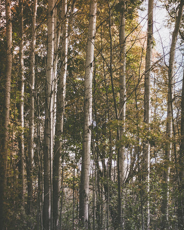 Forest Poster featuring the photograph Werifesteria by Maria Tzoganakis