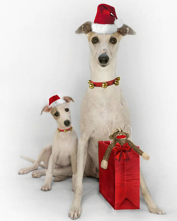 Whippet Poster featuring the digital art Whippet Christmas by John Clum