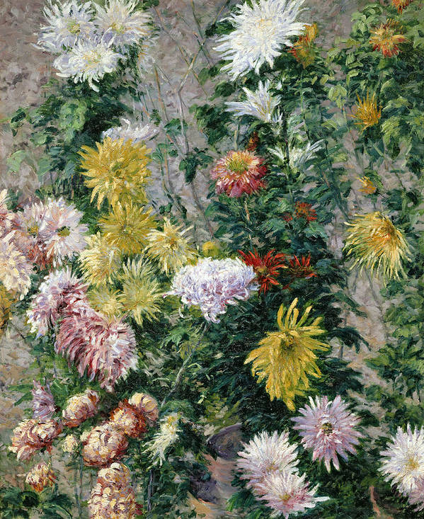 White Poster featuring the painting White And Yellow Chrysanthemums by Gustave Caillebotte
