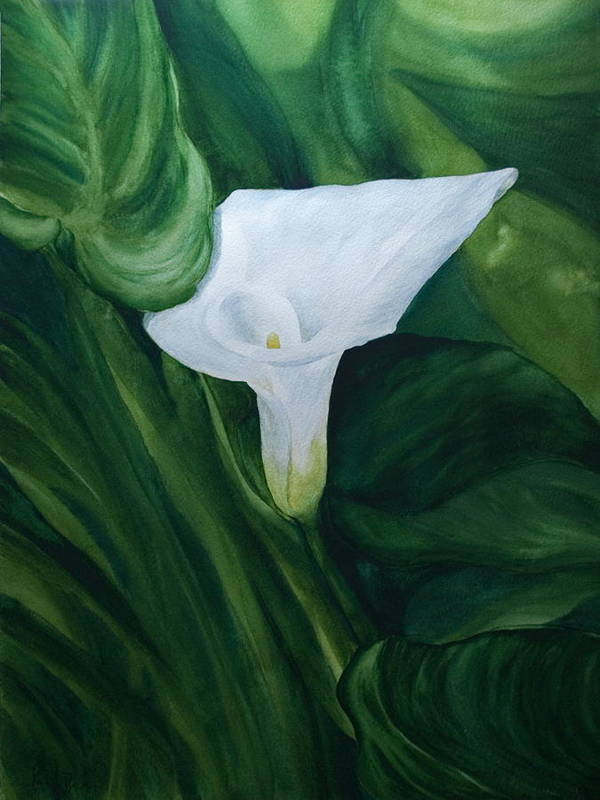 Floral Poster featuring the painting White Calla by Monika Degan