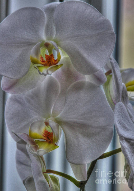 National Orchid Day Poster featuring the photograph White Orchids by David Bearden
