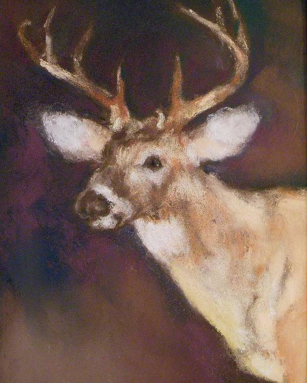 White Tail Deer Poster featuring the painting White Tail Buck by Debbie Anderson