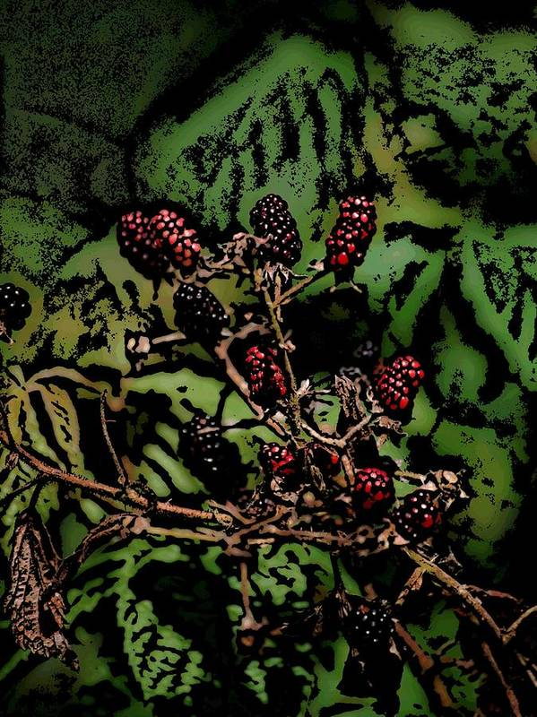 Digital Photography Poster featuring the photograph Wild Berries by David Lane