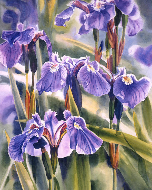 Wild Poster featuring the painting Wild Irises #1 by Sharon Freeman