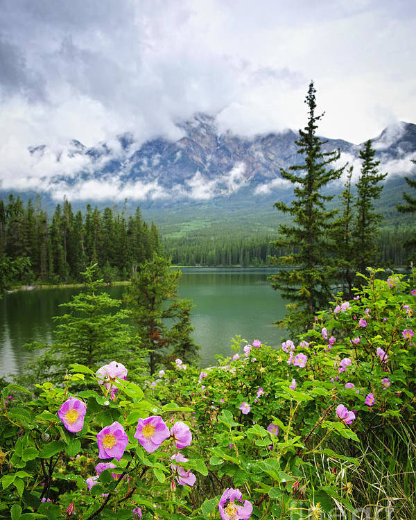 Wild Rose Poster featuring the photograph Wild Roses And Mountain Lake In Jasper National Park by Elena Elisseeva