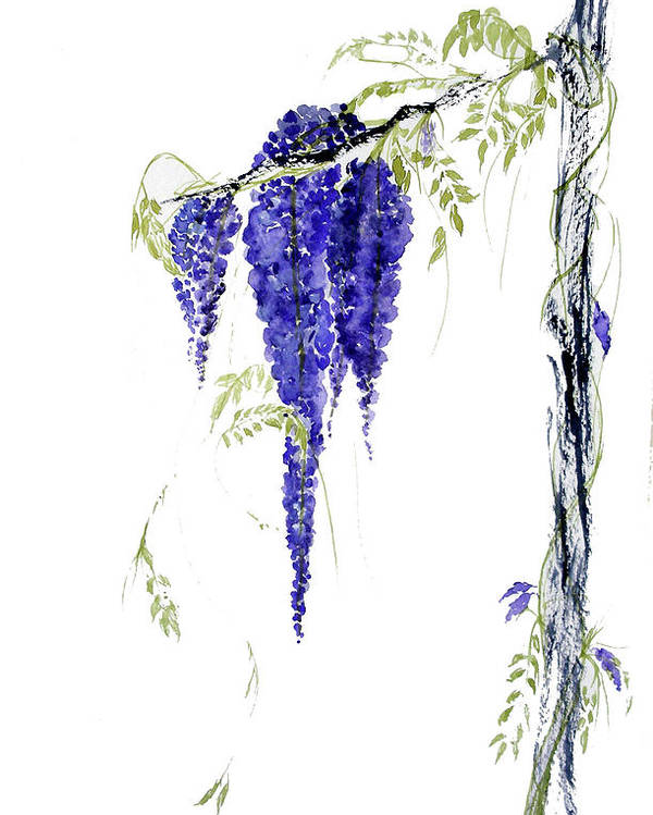 Wisteria Poster featuring the painting Wild Wisteria by Sibby S