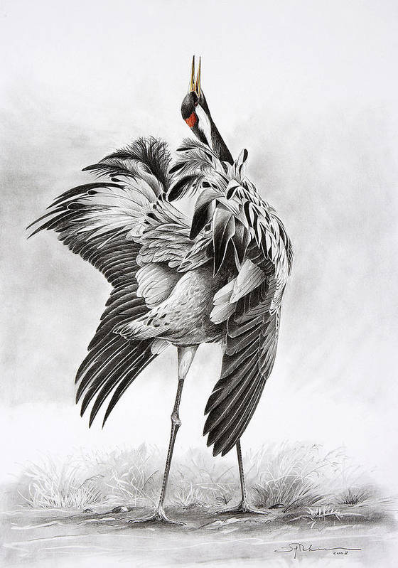 Crane Poster featuring the drawing Wilderness Is Calling by Dag Peterson