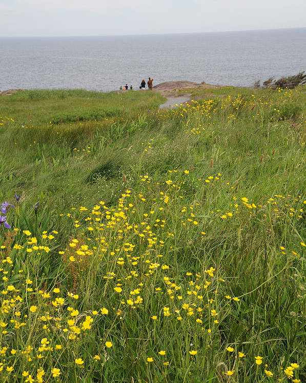 Cape Spear Poster featuring the photograph Wildflowers At Cape Spear by Terese Loeb Kreuzer