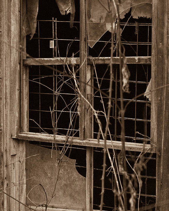 Window Poster featuring the photograph Window Of A Forgotten Mystery by Douglas Barnett