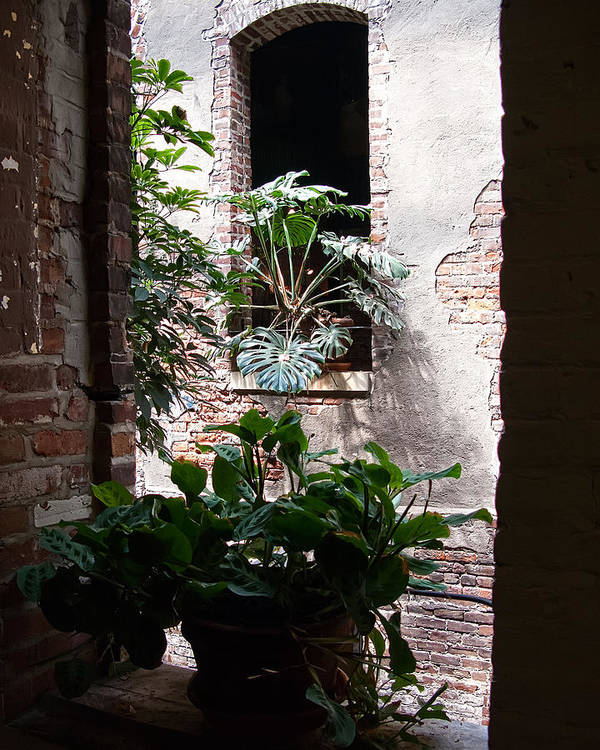 Window Poster featuring the photograph Window Plants by Gary Prill