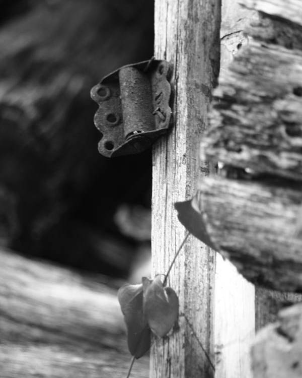 Ansel Adams Poster featuring the photograph Winslow Cabin Door Detail by Curtis J Neeley Jr