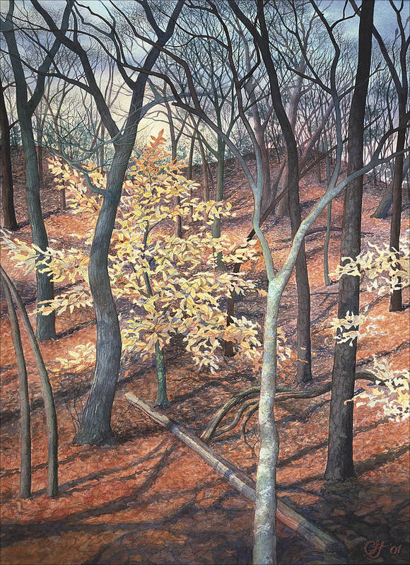 Trees Poster featuring the painting Winter Beech by Craig Gallaway