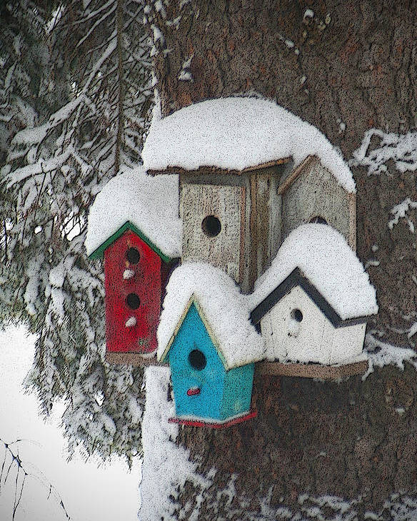 Winter Poster featuring the photograph Winter Birdhouses by Tim Nyberg