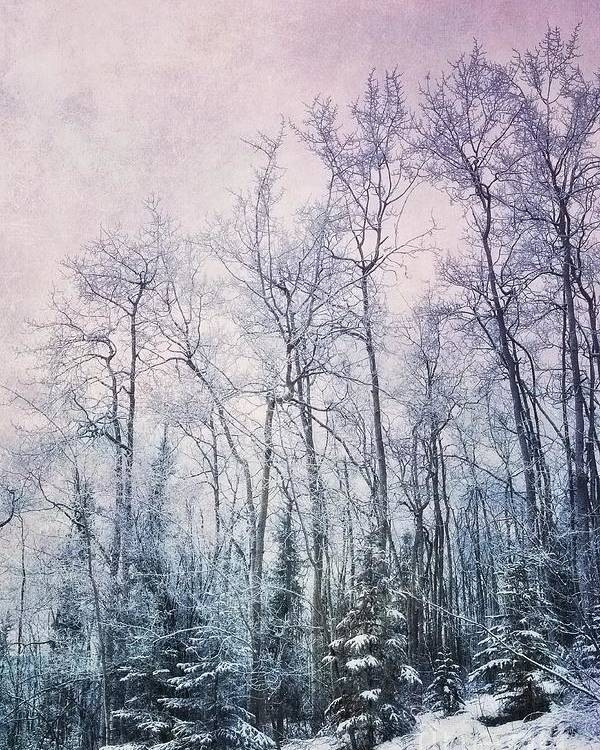 Forest Poster featuring the photograph Winter Forest by Priska Wettstein