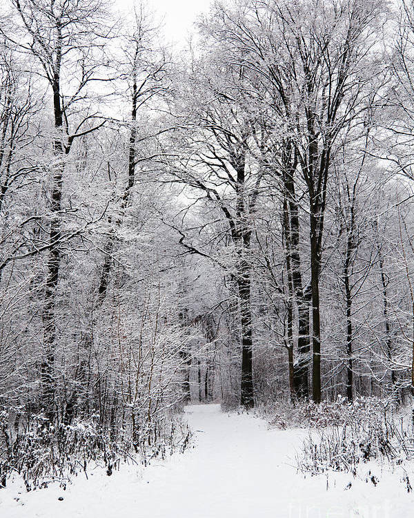 Winter Poster featuring the photograph Winter In The Forest by Gabriela Insuratelu