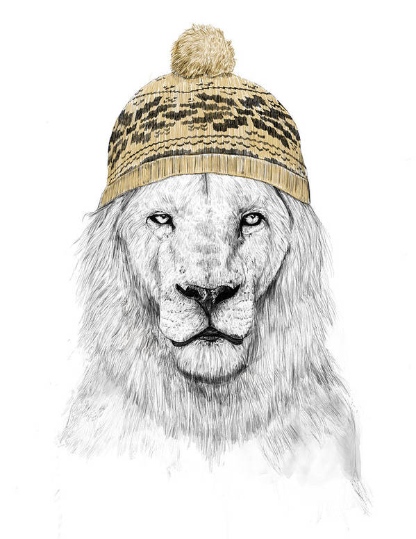 Lion Poster featuring the drawing Winter lion by Balazs Solti