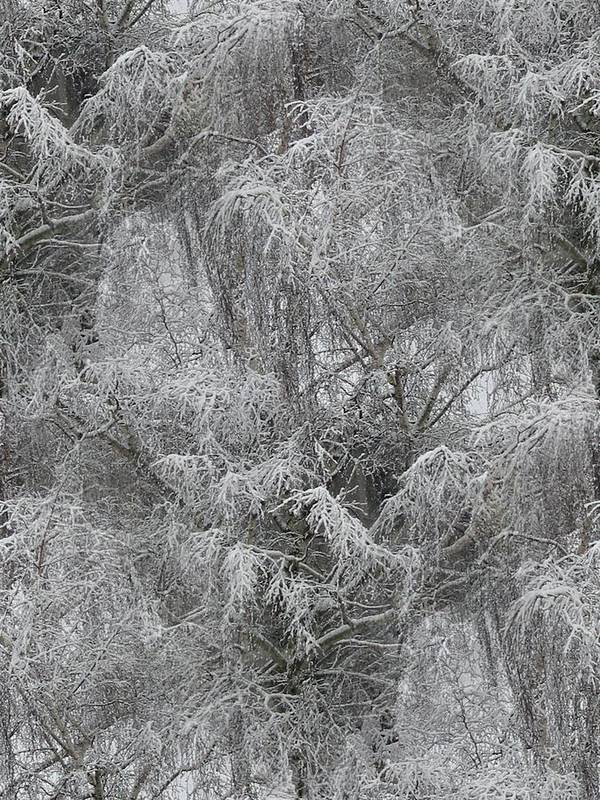 Winter Poster featuring the photograph Winter Trees by Tim Allen