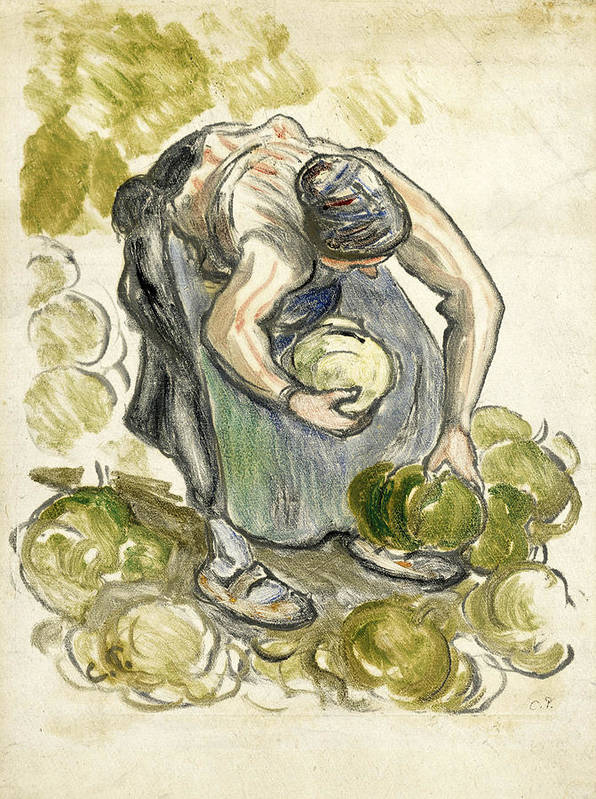 Camille Pissarro Poster featuring the drawing Woman Picking Cabbage by Camille Pissarro