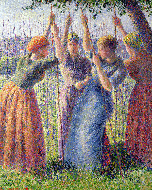 Woman; Women; Plant; Pea; Growing; Peas; Farming; Crop; Cropping; Impressionist; Realist; Landscape; Femmes; Femme; Plantant; Pois; Petit; Petits; Planting; Peasticks Poster featuring the painting Women Planting Peasticks by Camille Pissarro