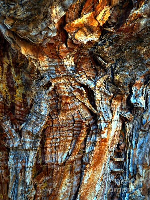 Abstract Poster featuring the photograph Wood Wrinkles by Lauren Leigh Hunter Fine Art Photography